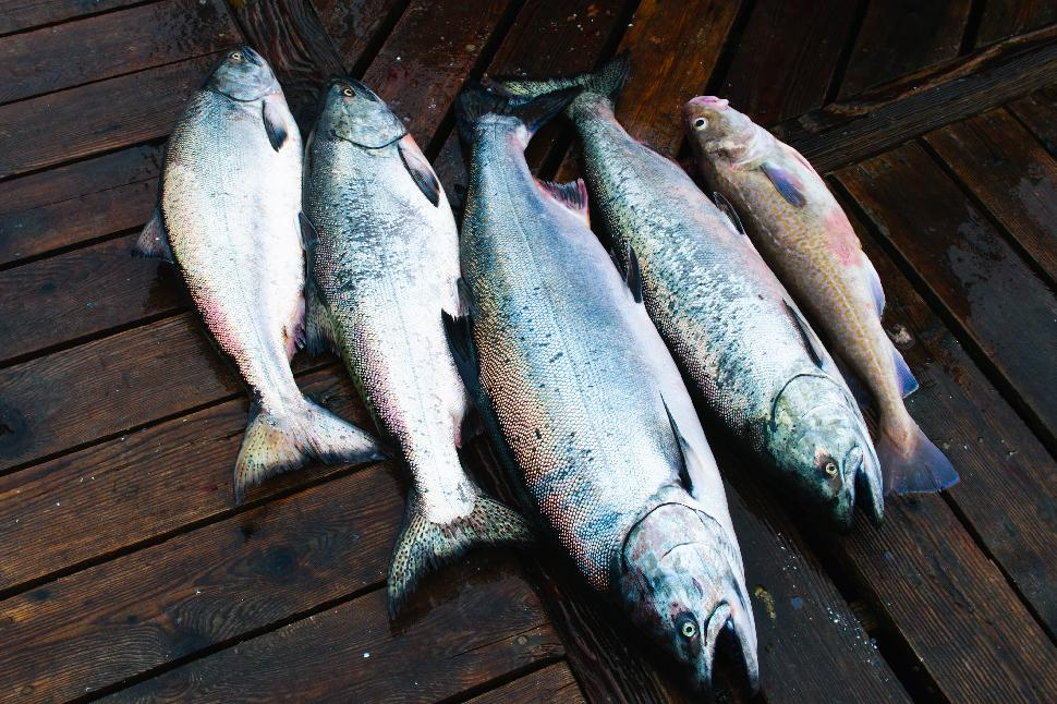 Image result for Columbia River salmon guide istock