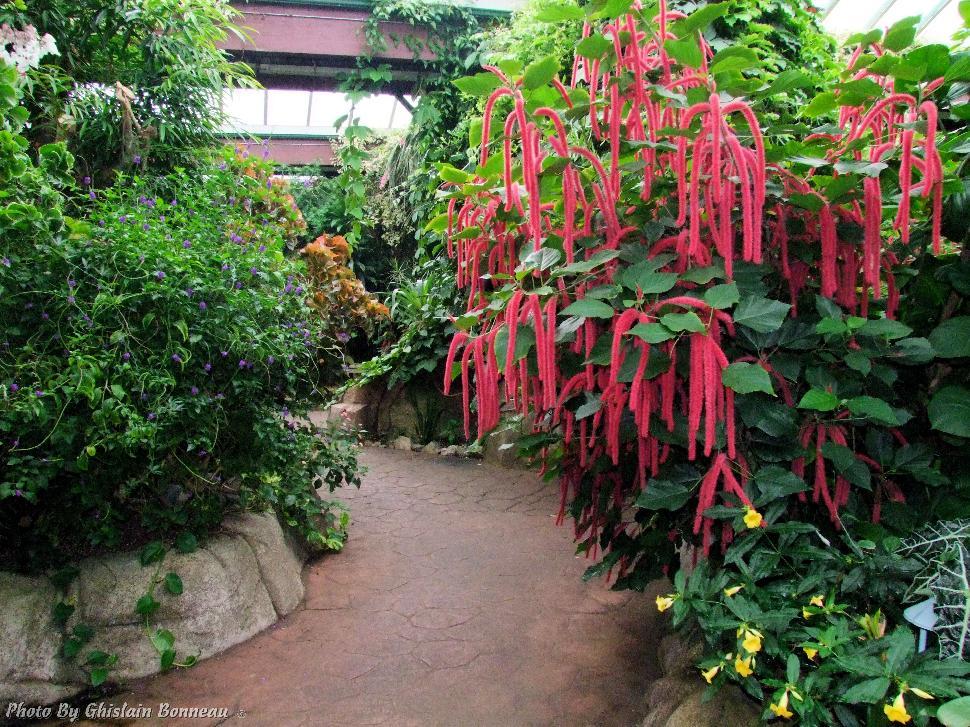 Merveilleux Victoria Butterfly Gardens