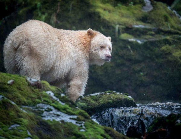 Visit The Great Bear Rainforest
