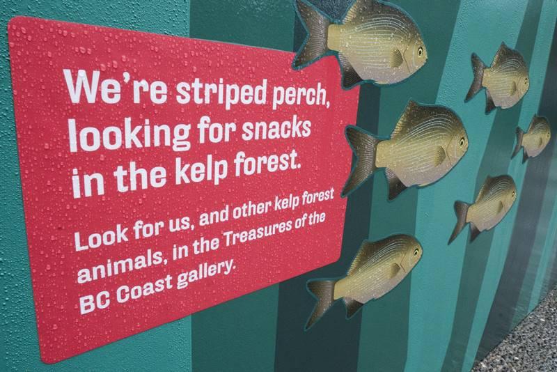Kelp Forest Maze